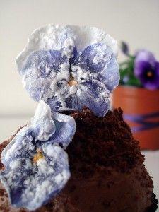 tierra cupcake